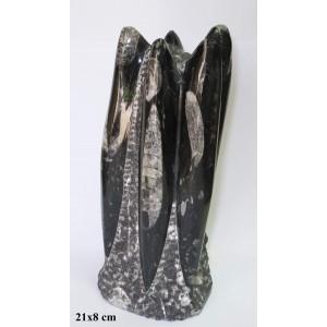 Fosil Ortoceras