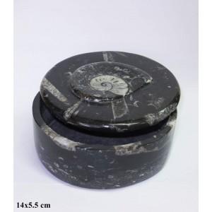 Fosil Amonit, Ortoceras