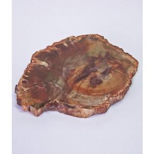 Fosil Okameneli Les