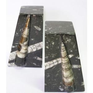 Fosil Ortoceras - knjižno stojalo